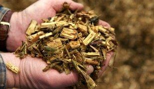 La biomassa s'obre pas a Catalunya