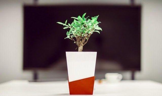 L'usuari pot controlar a través del mòbil l'estat de les plantes