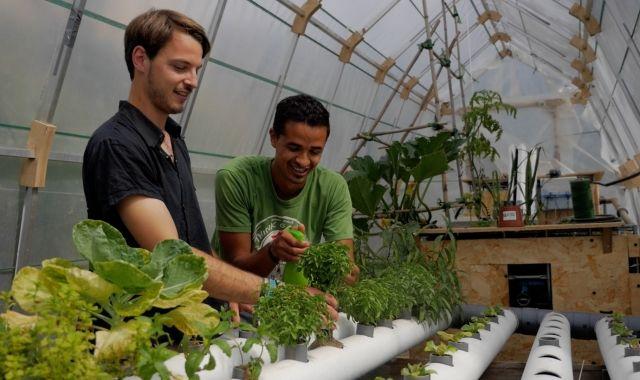 A l'hivernacle han conreat més verdures per demostrar que una altra agricultura és possible | Cedida