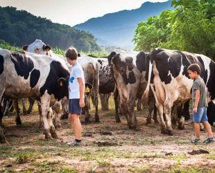 Entre les set granges catalanes Llet ATO té més de 6.000 vaques