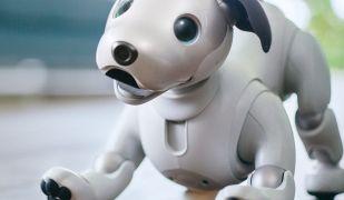 El gos robot Aibo de Sony