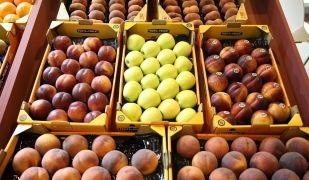 fruita lleida afrucat